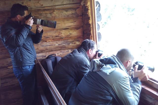 Brown Bears watching tour